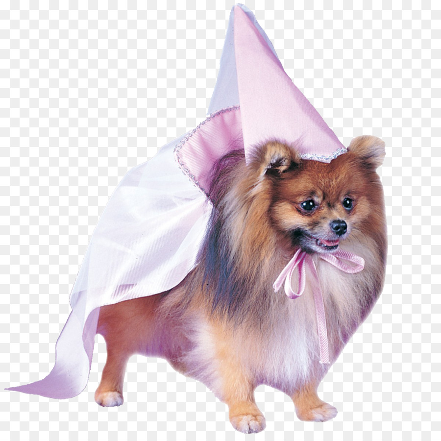 halloween costume pet dress pomeranian - dog png download - 1200