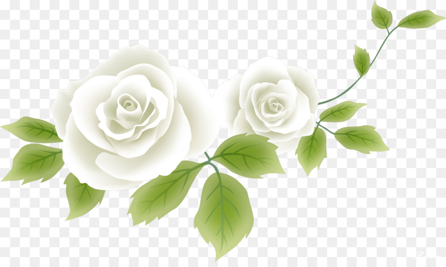 Flower Drawing Clip Art White Rose Png Download 1529 900 Free