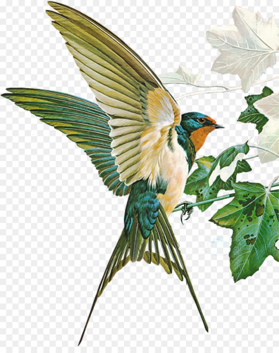 birds of town and village barn swallow hirundininae passerine bird