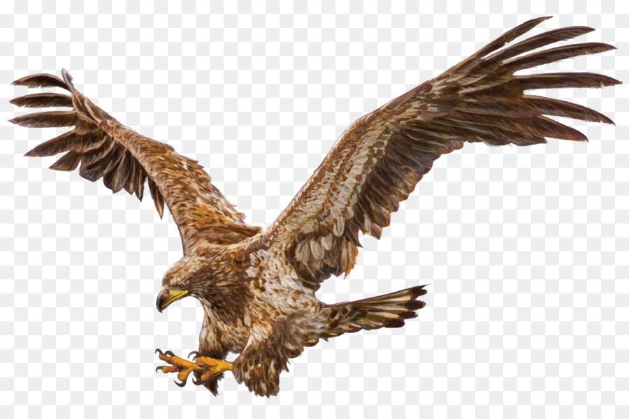 Águila Calva De Aves De Dibujo - depredador Formatos De Archivo De ...