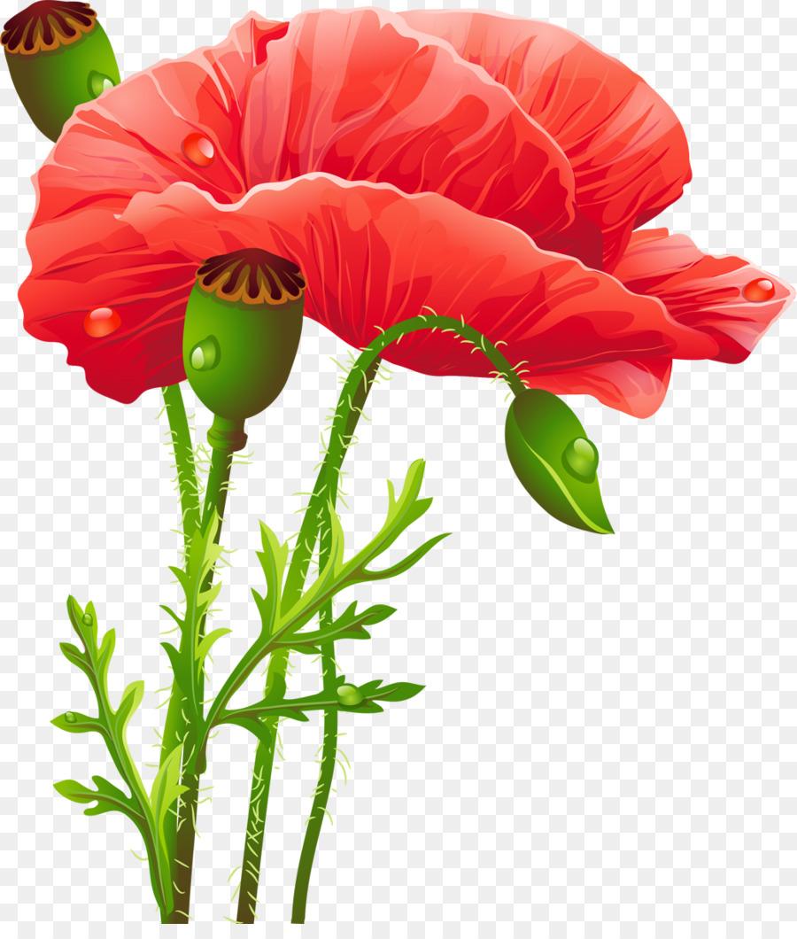 Poppy Flower Clip Art Marigold Png Download 10351200 Free