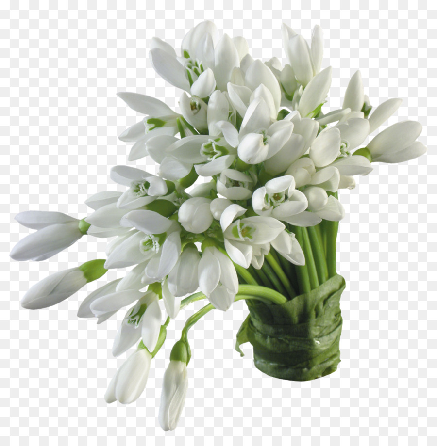Snowdrop Flower Color Blossom White - lily png download - 1000*1011 ...