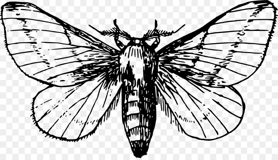 Moth drawing - photo#52