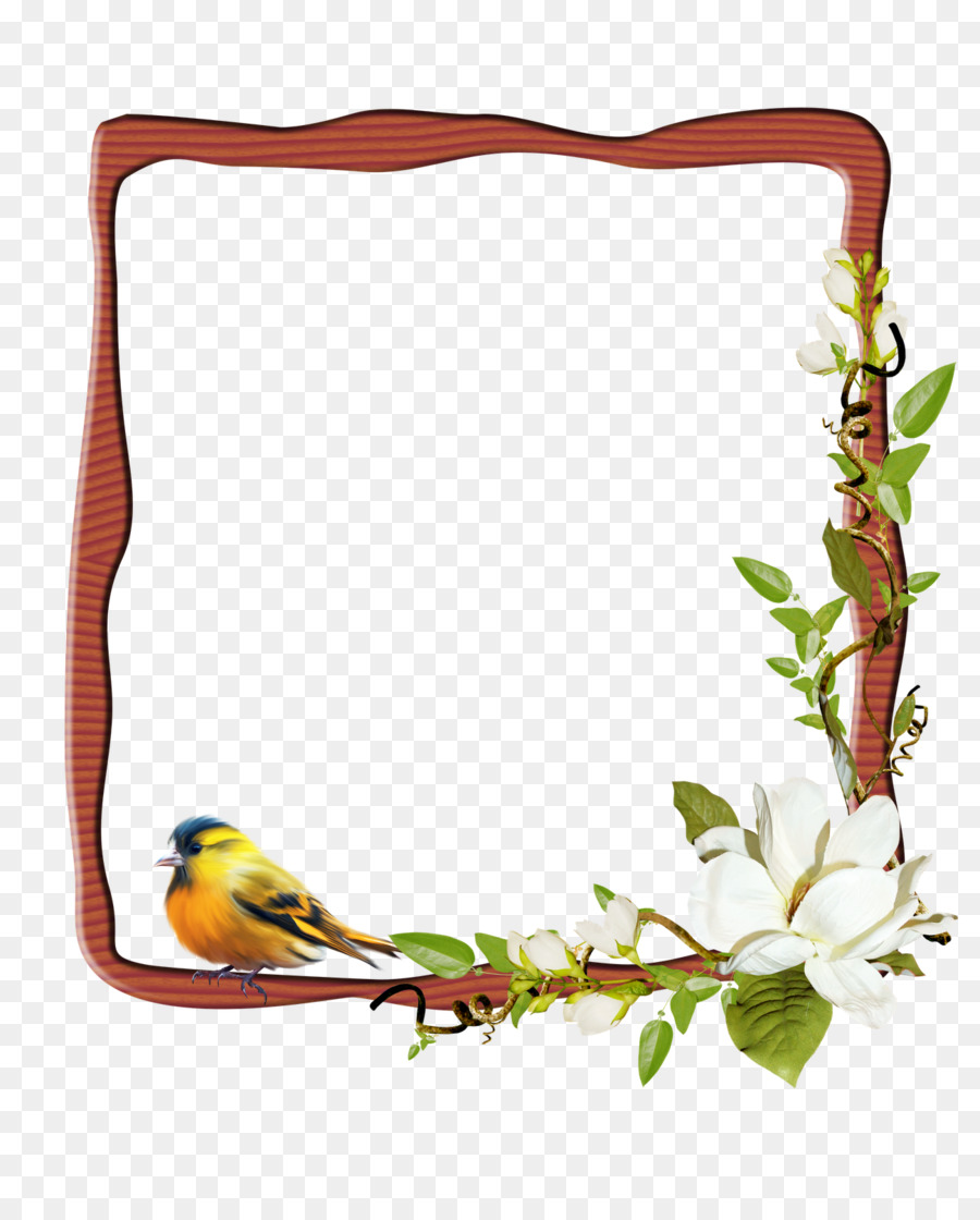 Marcos De Imagen De La Fotografía - Photoshop png dibujo ...