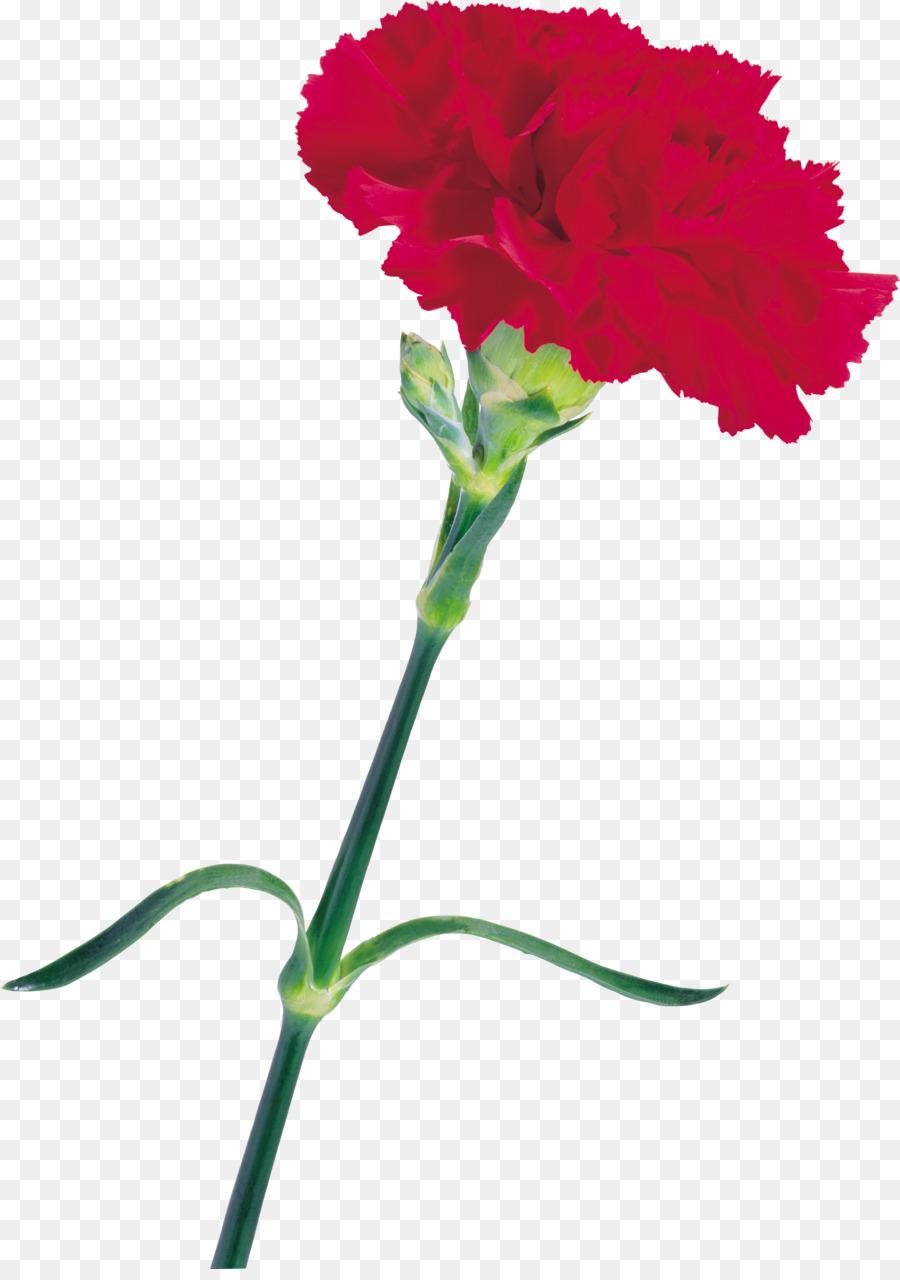 Carnation Cut Flowers Desktop Wallpaper Dianthus Chinensis Onion