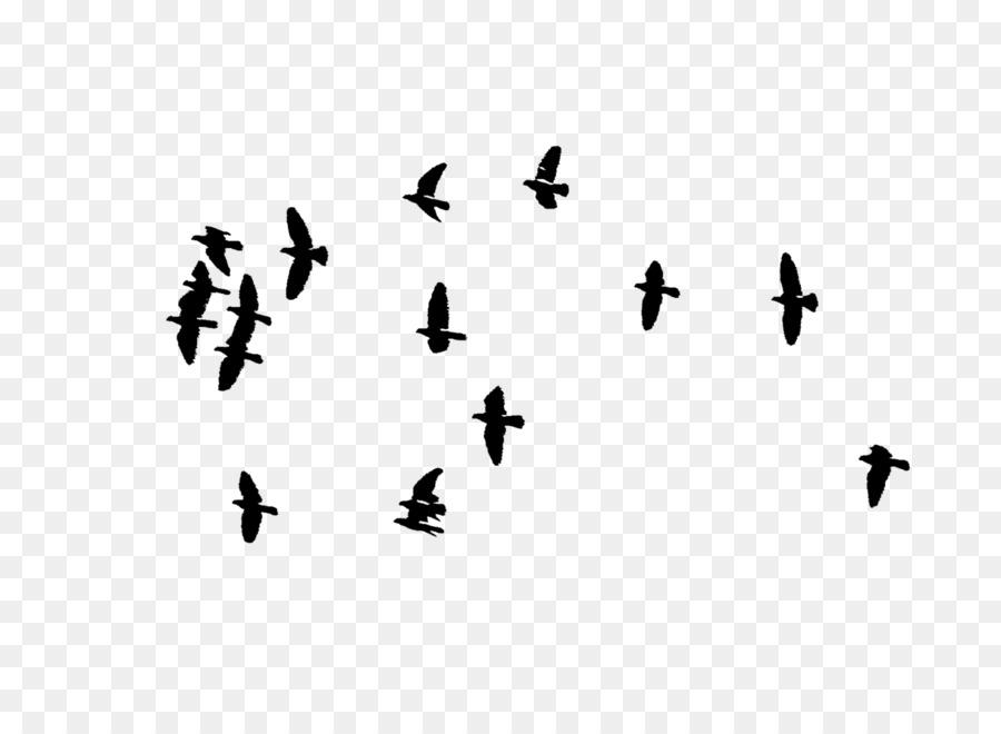 Bird Nest Flock Clip Art Birds Png Download 16001147 Free