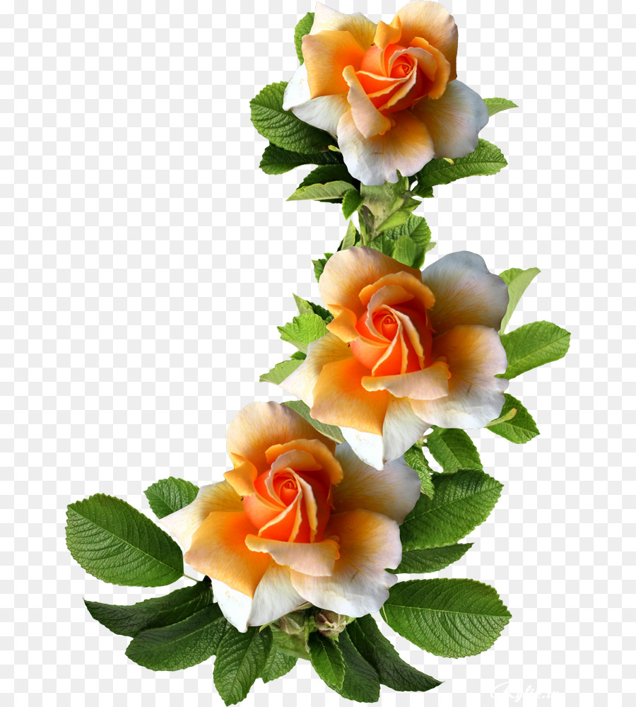 Garden Roses Flower Picture Frames Photography Pretty Flowers Png
