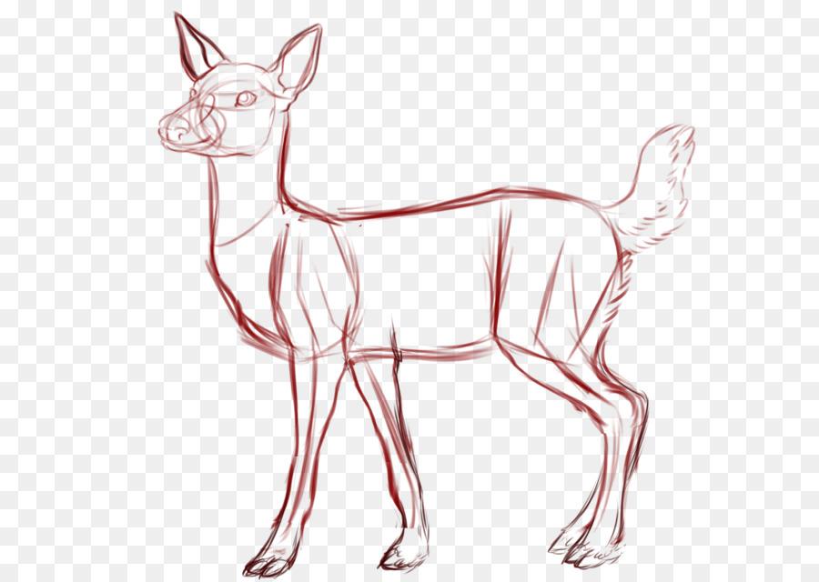 El venado cola blanca Dibujo de Croquis - los ciervos png dibujo ...