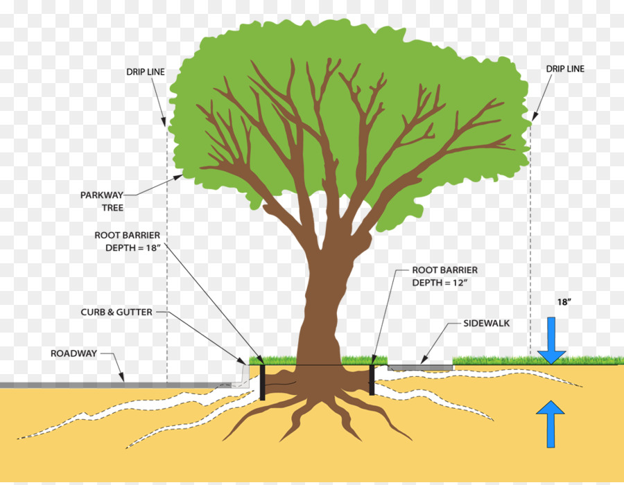 Tree plant stem root system pruning tree lined png download 1000 tree plant stem root system pruning tree lined ccuart Choice Image