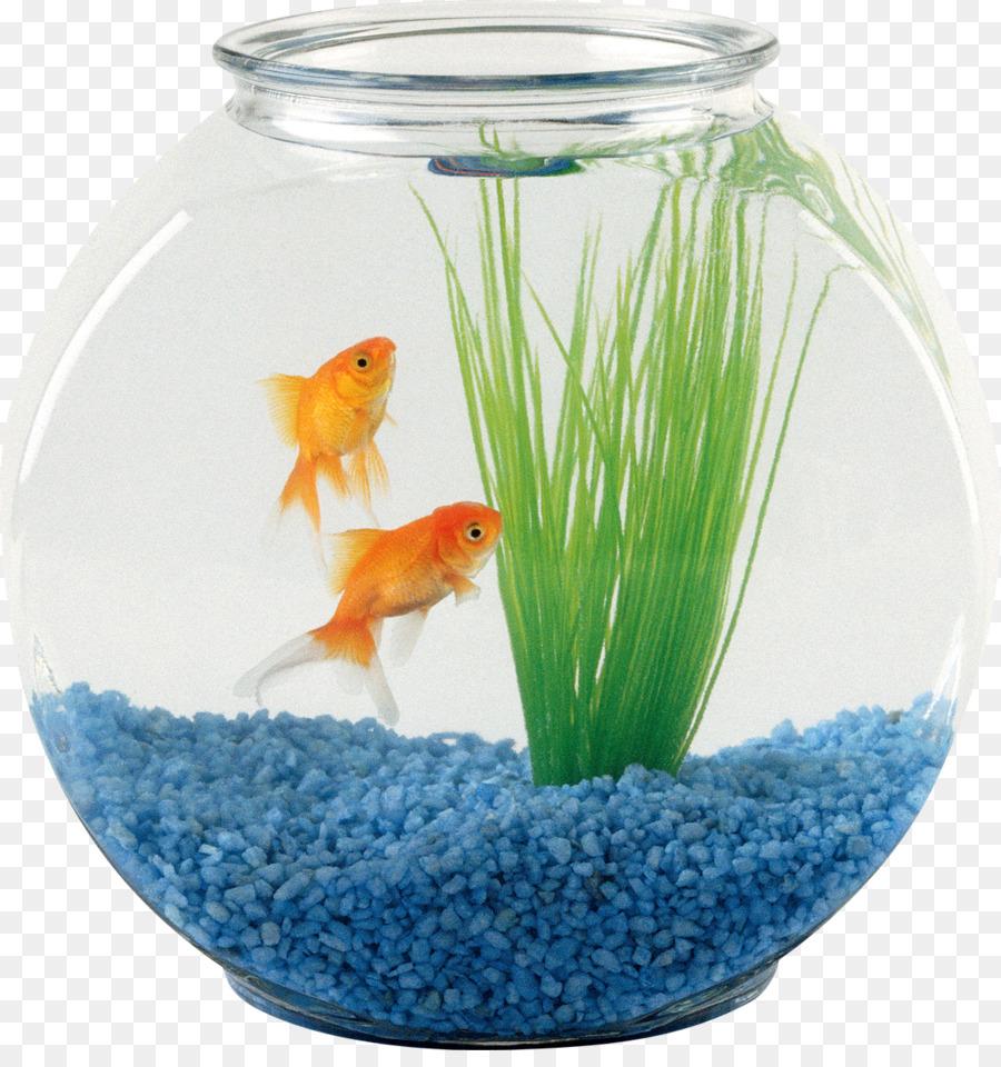 Pet Sitting Oranda Aquarium Fish Fish Bowl Png Download 1168