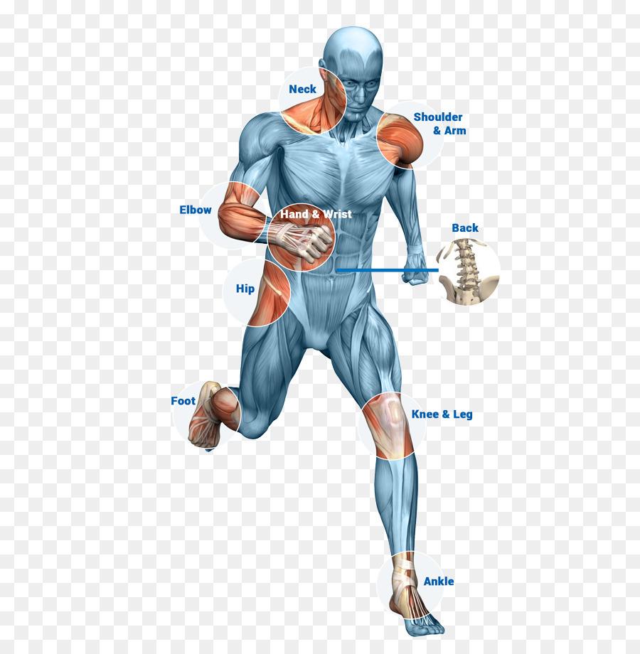 Physical therapy Orthopedic surgery Human body Bone - slim body ...