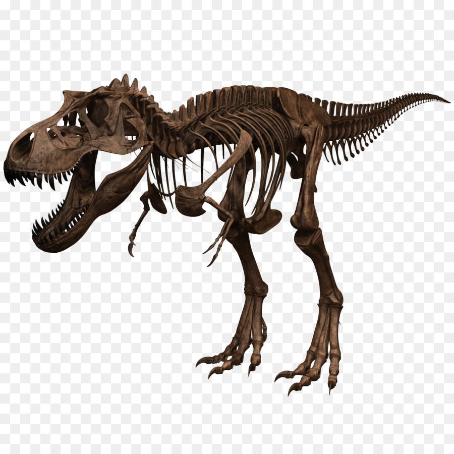 Tyrannosaurus Skeleton Dinosaur Skull Human body - Skeleton png ...