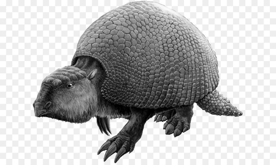 Glyptodon Tortuga Exoesqueleto De Los Vertebrados Reptiles - exo ...