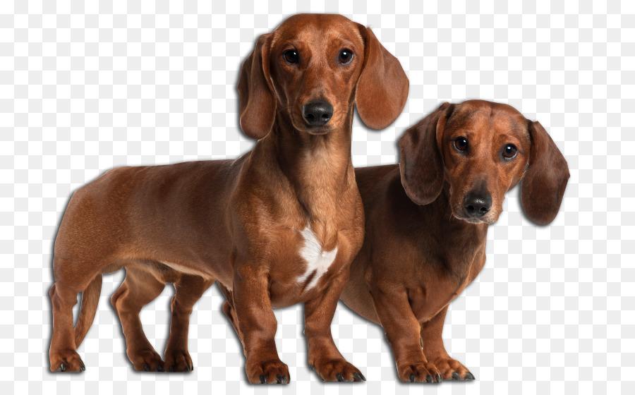 Dachshund Puppy German Shepherd Shiba Inu Breed Dogs Png Download