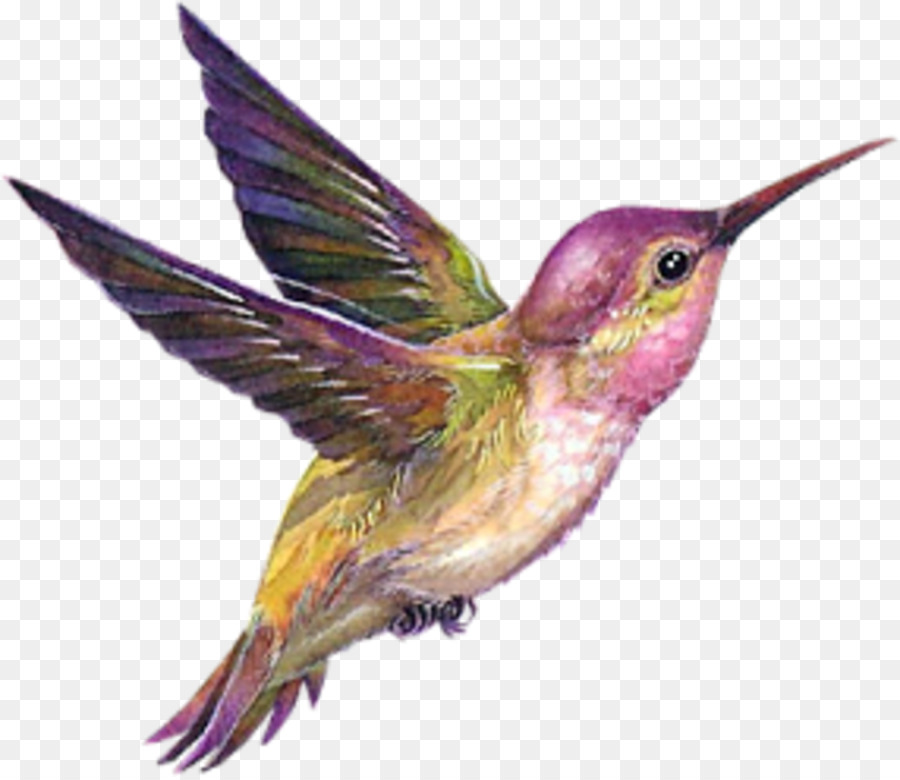 Rufous hummingbird drawing - photo#43