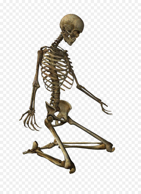Esqueleto humano Clip art - los huesos humanos png dibujo ...