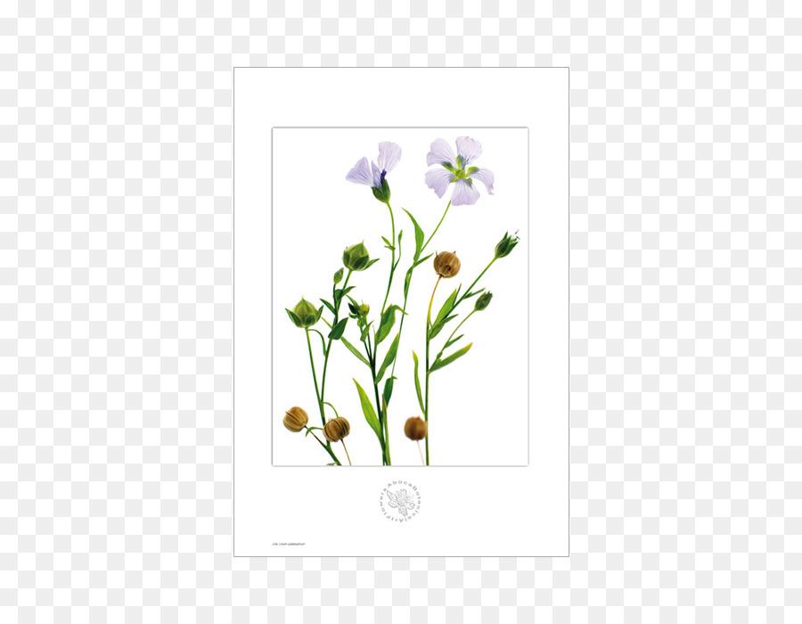 Paper Flower Botany Printing   Botanical Flowers