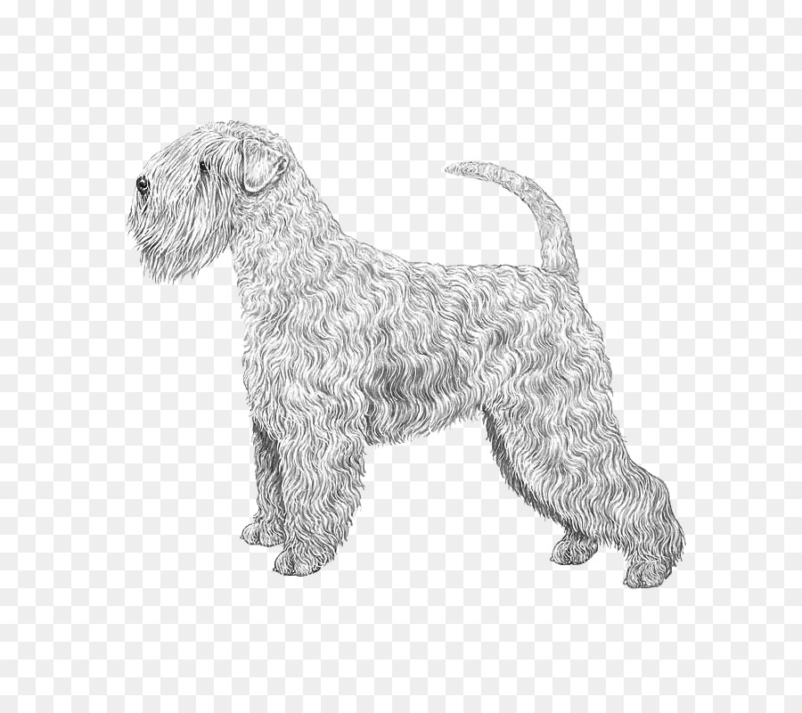 Soft-coated Wheaten Terrier Irish Terrier Glen of Imaal Terrier Wire ...