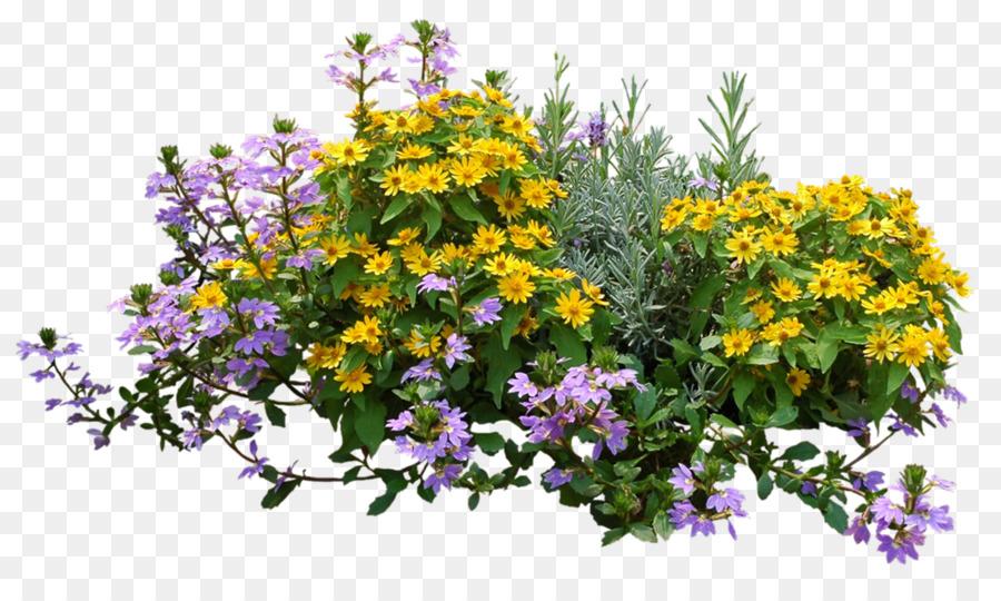 shrub flower garden rose shrub plan png download 1024