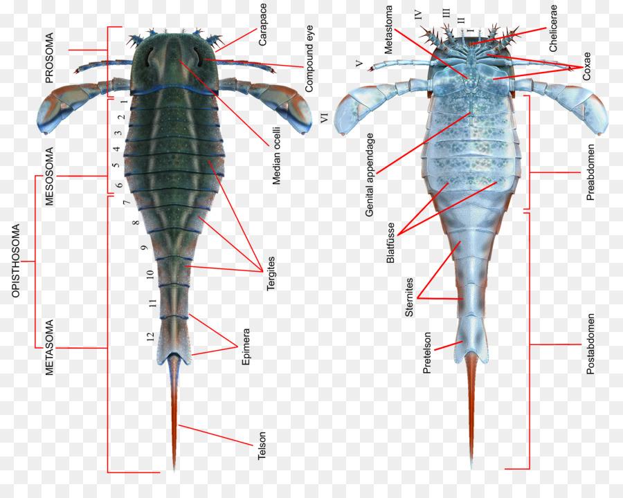 Eurypterid Eurypterus Silúrico Chino Escorpión Pterygotus ...