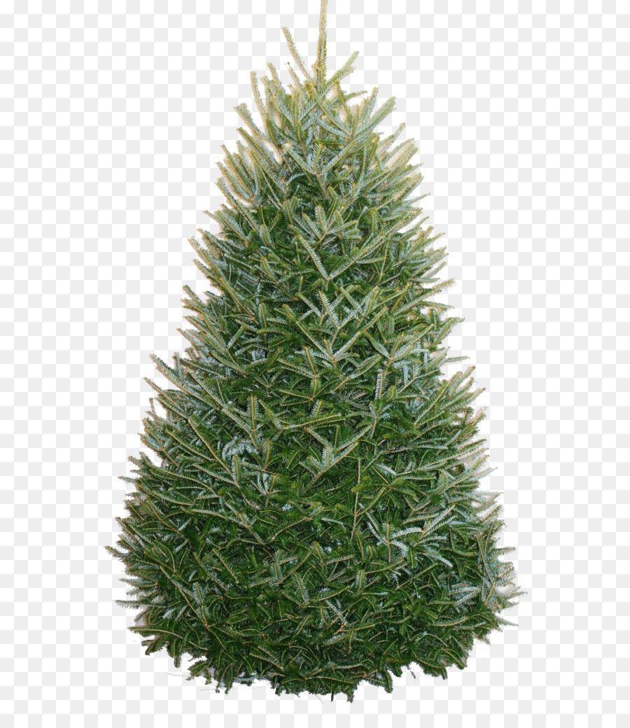 Nordmanntanne Weihnachtsbaum.Fraser Tanne Weihnachtsbaum Nordmanntanne Frische Garland Png