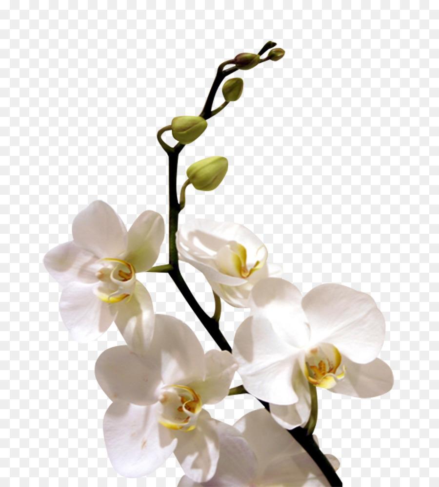 Flower orchids desktop wallpaper orchid flower png - White orchid flowers desktop wallpapers ...