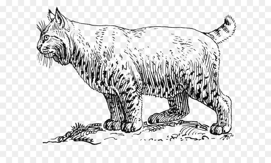 Bobcat Cougar Wildcat libro para Colorear, imágenes prediseñadas ...