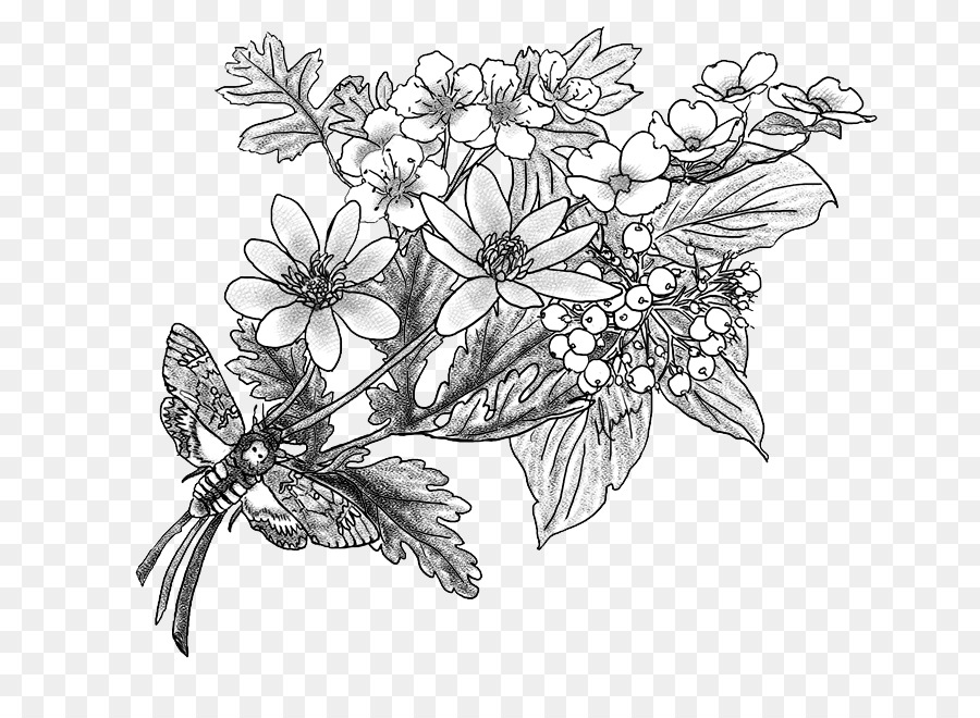 Flower Tree Drawing Sketch - Hawthorn Png Download - 777*647 - Free Transparent Art Png Download.
