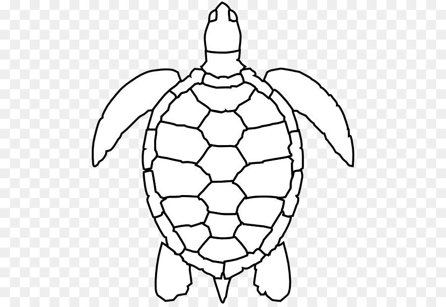 Green Sea Turtle Drawing Clip Art Sea Turtle