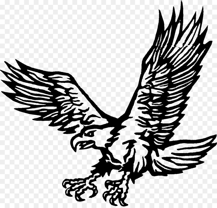 Gambar Golden Eagle Buku Mewarnai Elang Unduh Monokrom Fotografi