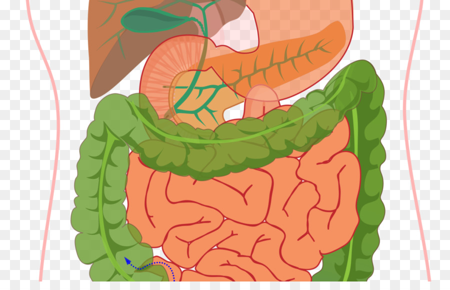 Human digestive system Diagram Digestion Gastrointestinal tract ...