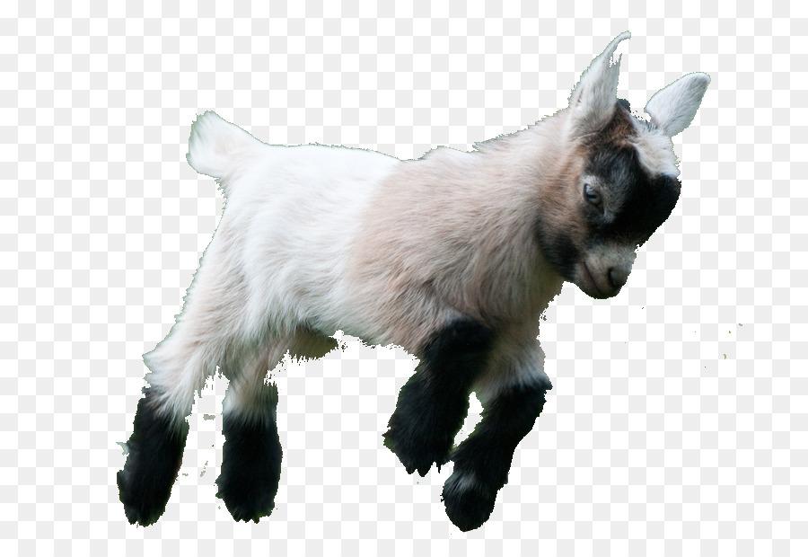 Goat Simulator Boer Fainting American Lamancha Pygmy