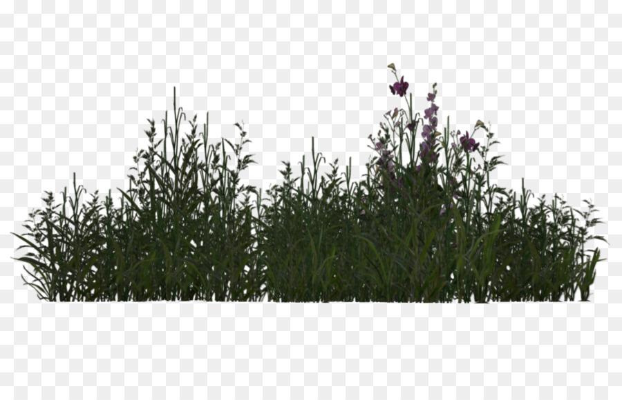 Pflanze Baum Gräser 3d Rendering Wüste Pflanzen Png Herunterladen