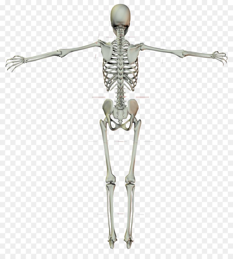 Esqueleto humano Crucifijo Cruz - esqueleto humano Formatos De ...