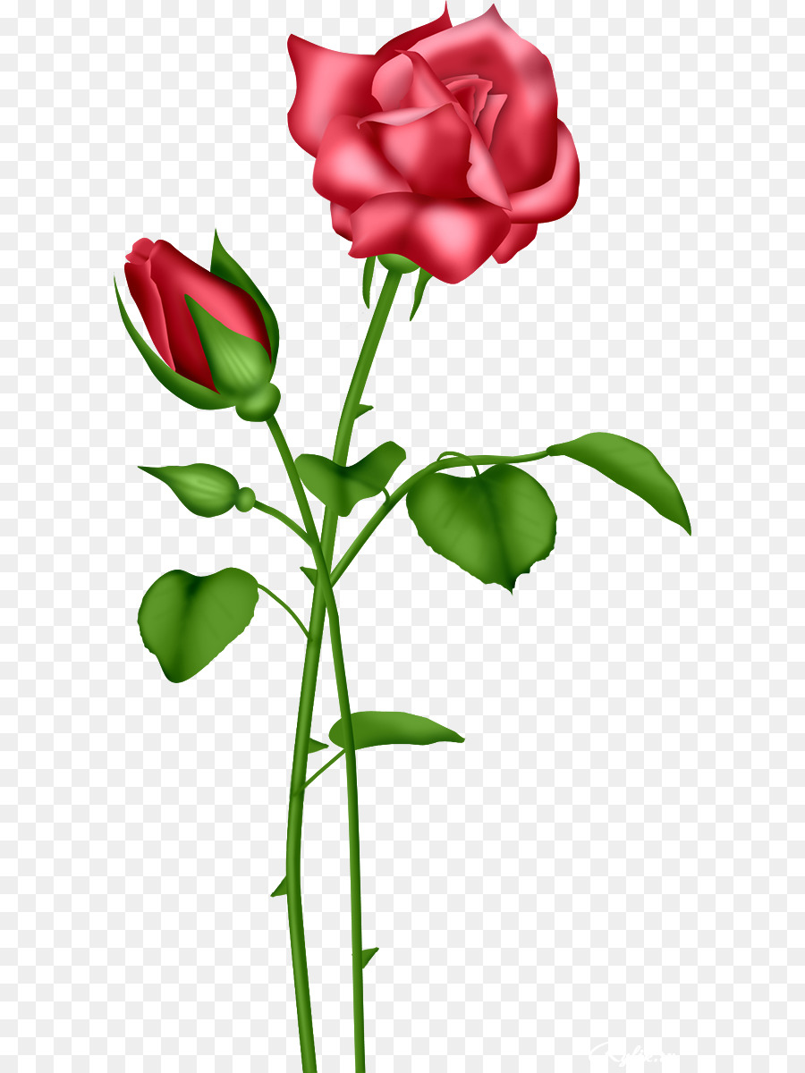 Marcos Clip art - Bonita Invitación De Boda Con Rosas png dibujo ...