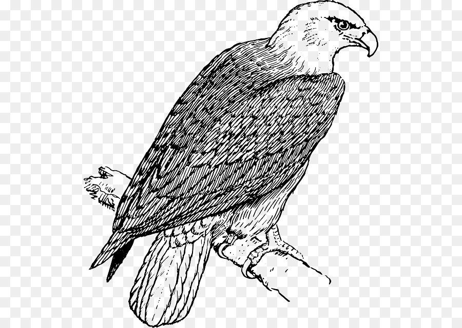 Águila calva libro para Colorear de Niño - golden peacock Formatos ...