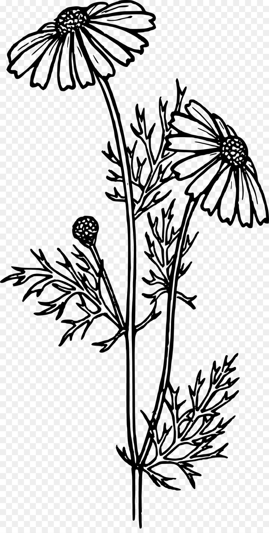 Coloring Book Drawing Flower Common Daisy Flower Png Download