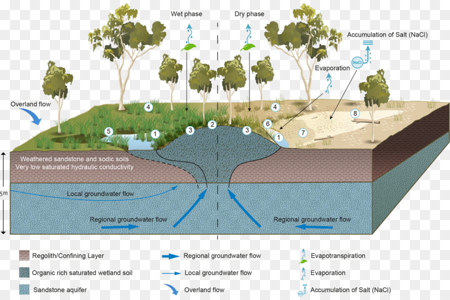 Wetland Groundwater Dependent Ecosystems Aquifer Water Resources