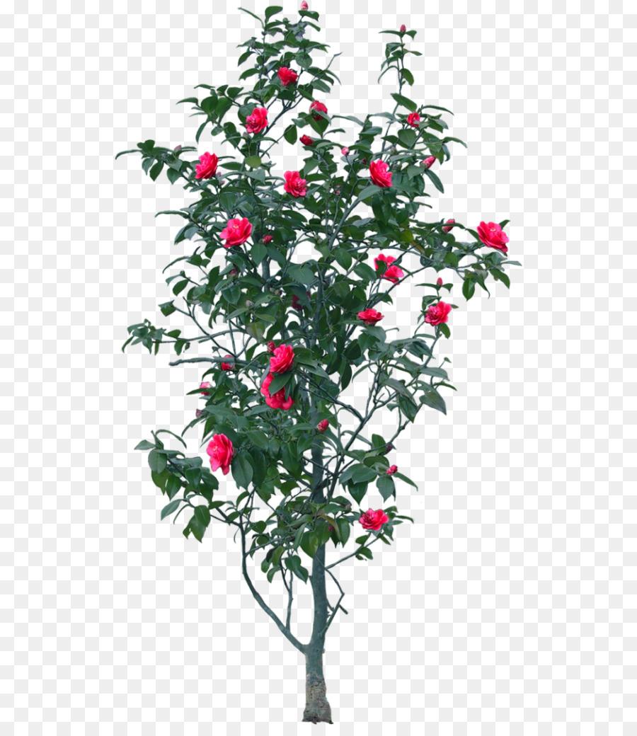 arbre de téléchargement de jardin - jardinage arbre décoratif