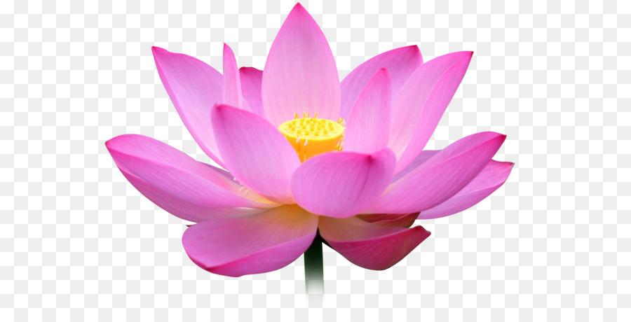 National Symbols Of India Meditation Mangrove Forest Png Download