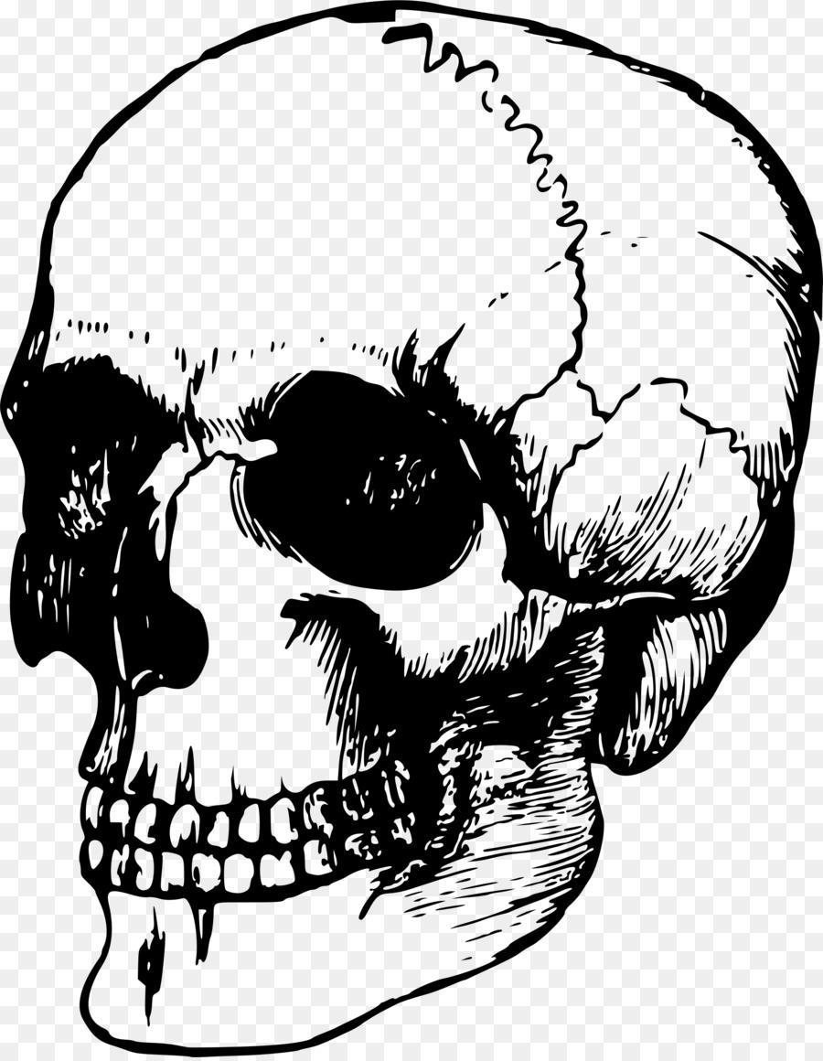 Skull Bone Human Skeleton Anatomy Vector Skull Png Download 1869