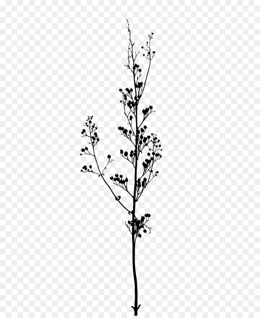 Twig Branch A Buddhist Spectrum Tree Black And White Flowers
