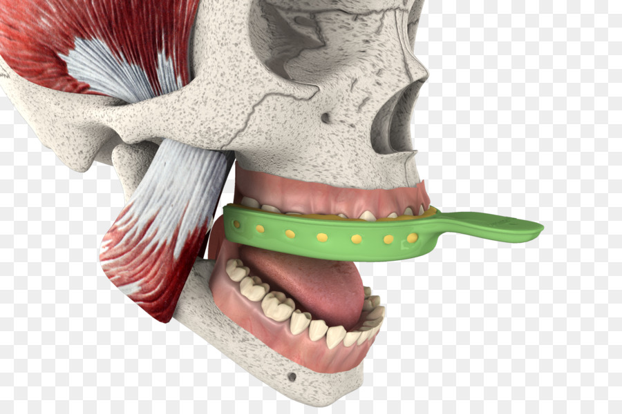 Video Bone Magic Joint Knee - 3d tooth png download - 1920*1280 ...