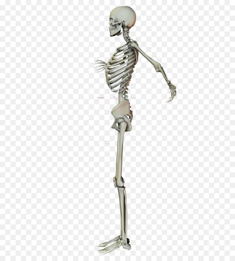 Skeleton Arm Stock Joint Shoulder Human Skeleton Png Download