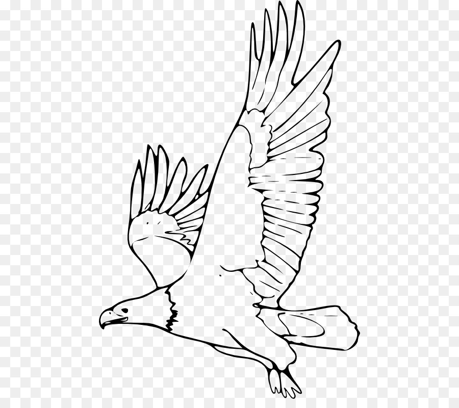 Bald Eagle Black And White Hawk Eagle Drawing Clip Art