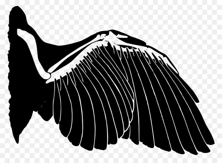Aves de Vertebrados de la Homología de evolución Convergente Ala ...