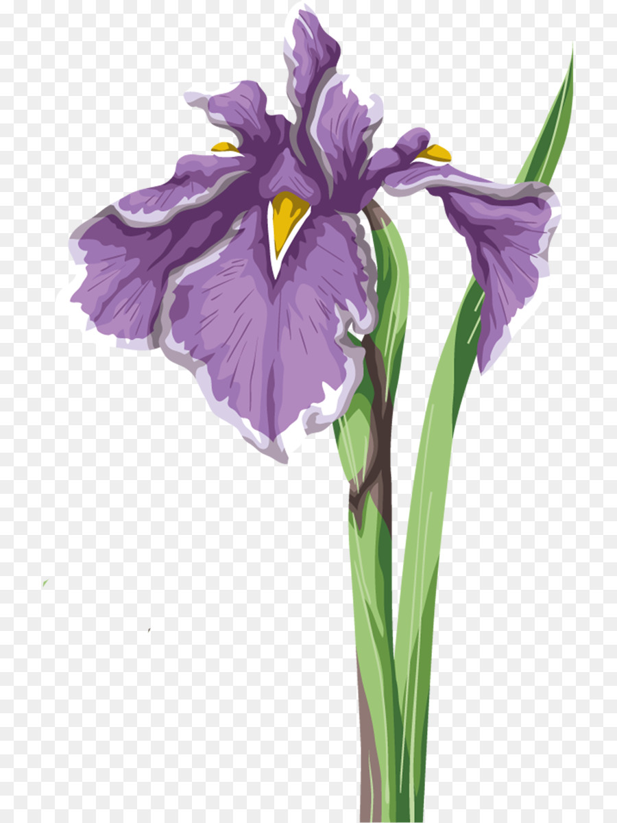 Iris flower data set wall iris iris versicolor flower png download iris flower data set wall iris iris versicolor flower izmirmasajfo