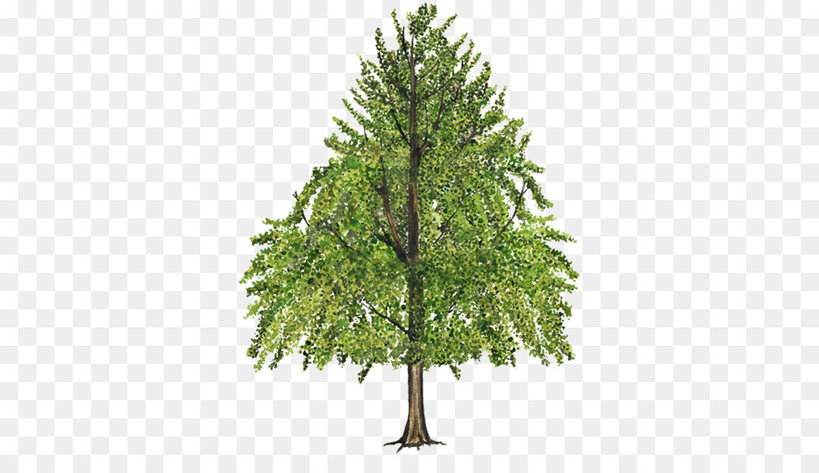 Christmas Branch Png.Christmas Tree Branch Png Download 750 502 Free