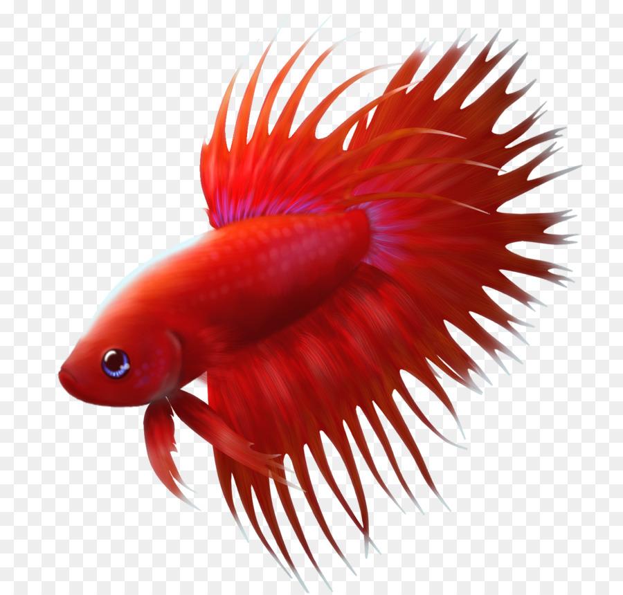 Ikan Cupang Lucu