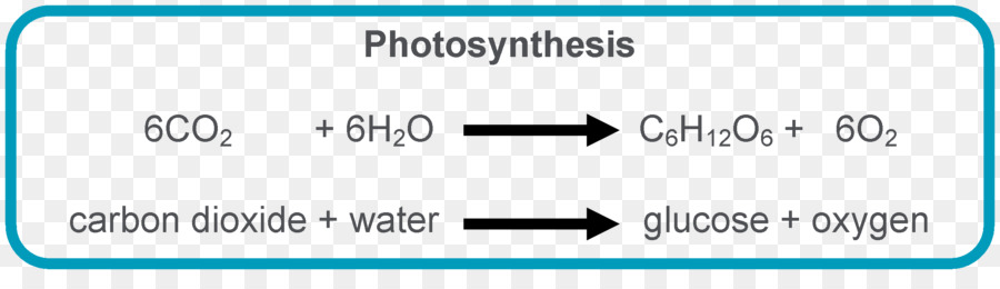 Photosynthesis equation chloroplast light dependent reactions photosynthesis equation chloroplast light dependent reactions symbiogenesis chemical reaction publicscrutiny Gallery